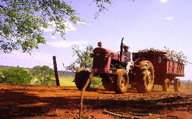 farm2b.JPG